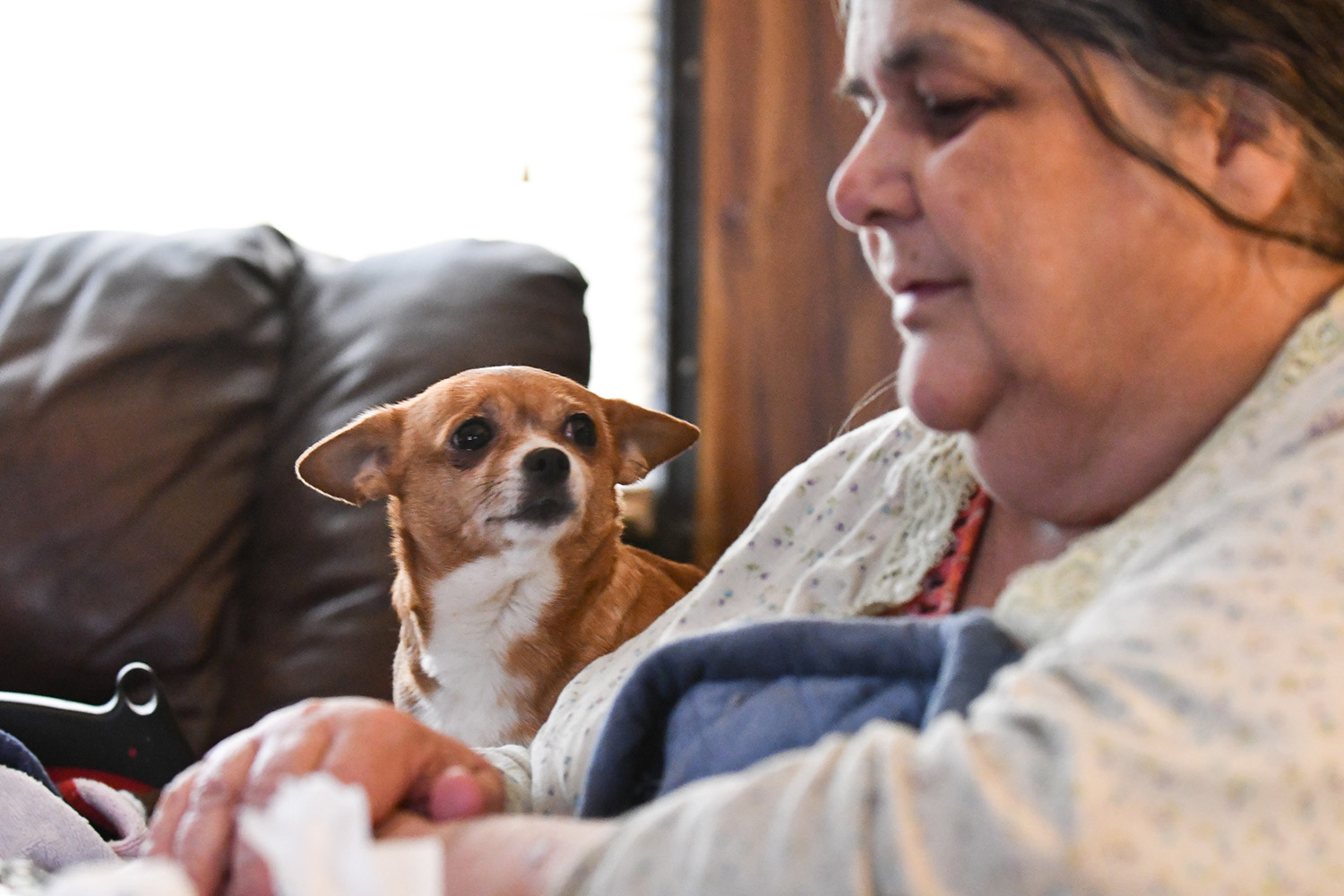 Snookie, a 7-year-old Chihuahua mix, drops her ears as she listens to her owner Terry Allen talk about the Feb. 2 fatal trailer fire, at the Airview Trailer Park, in Milan, Illinois, which killed three of their neighbors: Delores R. Martin, 71, Brittany Danielle Mote, 31, and Thomas J. Conley, 9. (Todd Mizener - Dispatch/Argus)